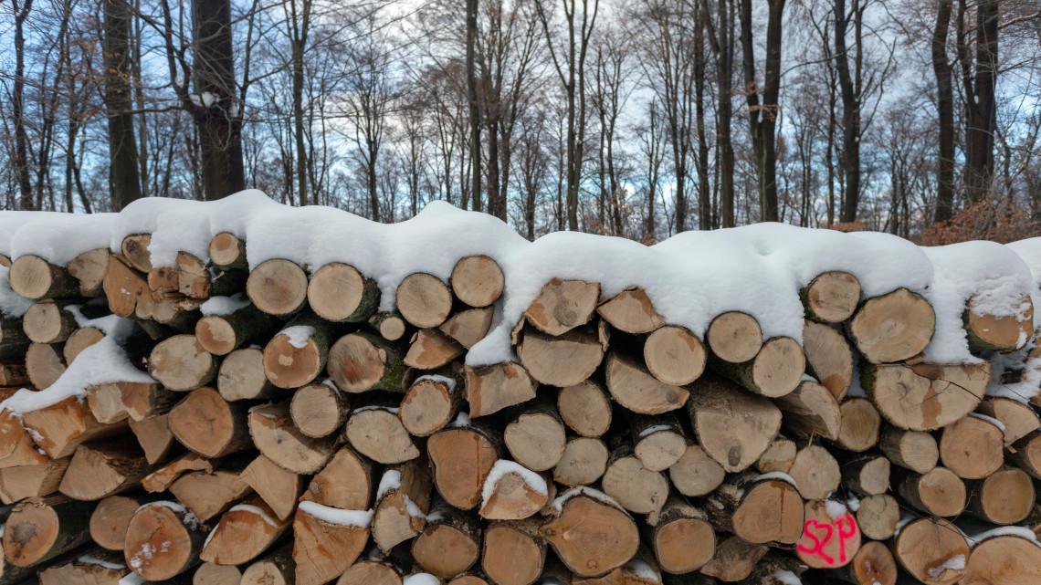 Ombudsman: az erdőtörvény nem a természetvédelemhez, hanem az erdőirtáshoz asszisztál