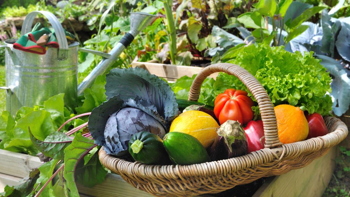 Holnapig lehet jelentkezni a konyhakerti és kisállattartási szociális földprogramra