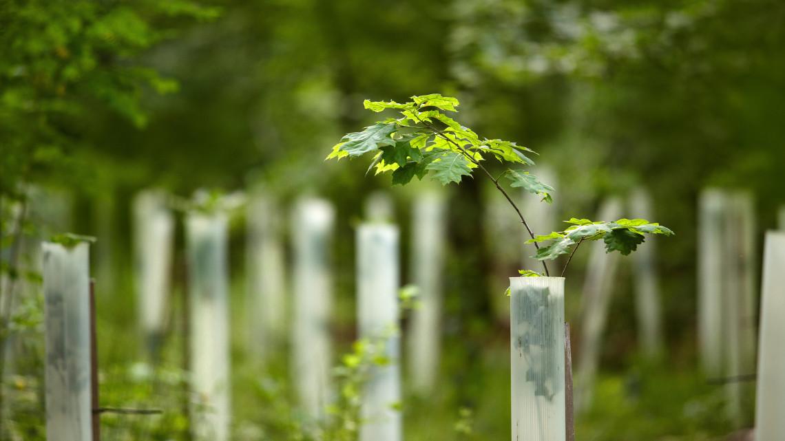 Nagyszabású erdőtelepítés indul: fák kerülnek a kopár területekre