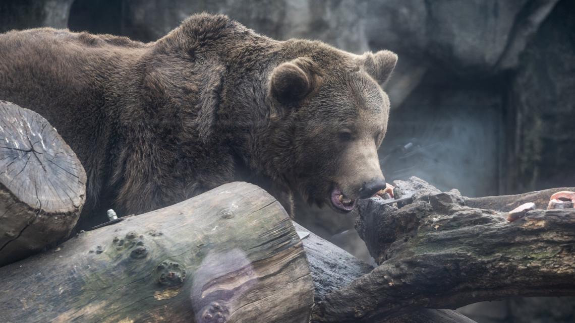 Egyre több a medve Magyarországon: ismét felbukkant egy példány