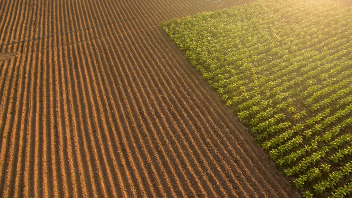 Tovább növelné az Agrárminisztérium a mezőgazdasági termelést