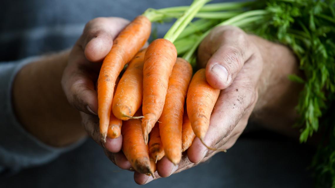 Tényleg csökkenti a rák kockázatát, ha csak bio élelmiszert eszünk? Itt a válasz!