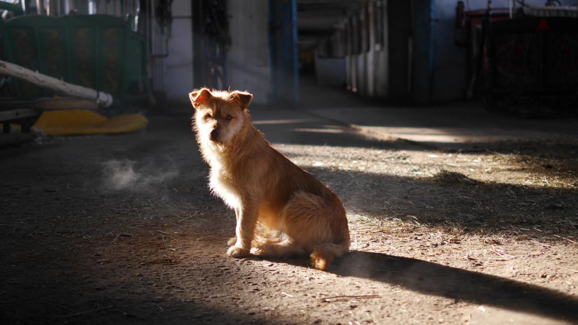Pusztító házikedvencek: veszélyeztetett fajok tűnhetnek el a kutyák miatt