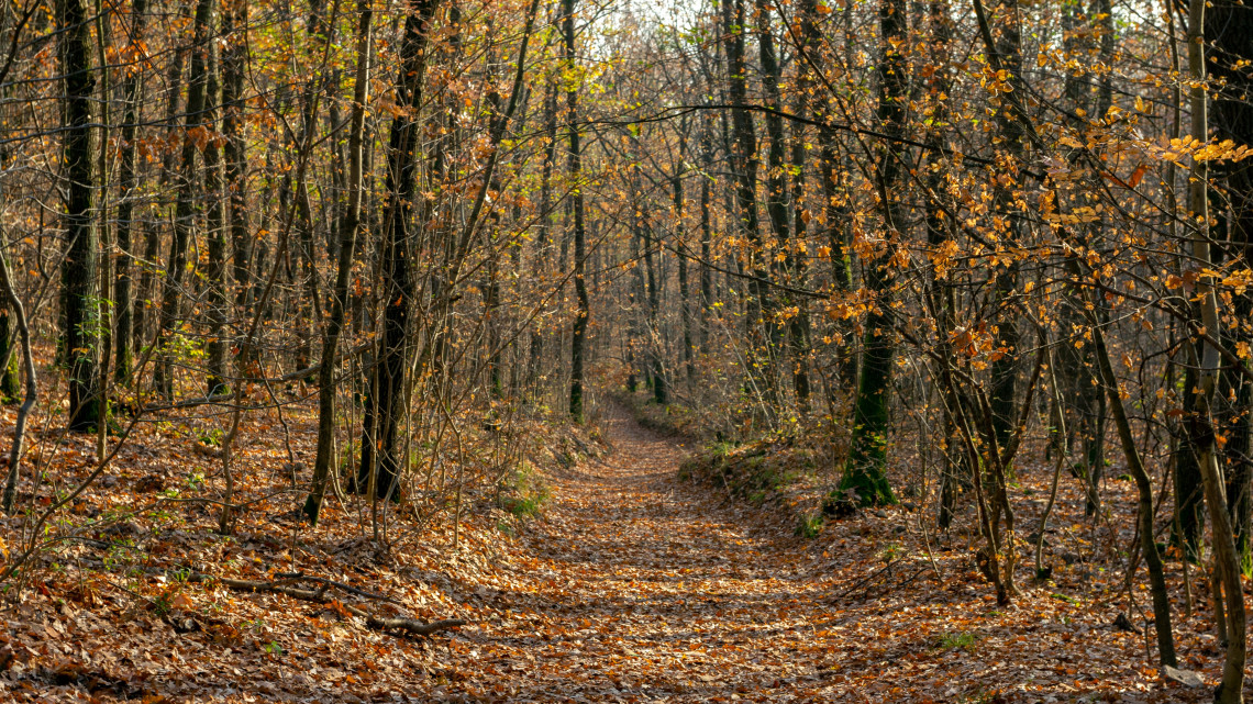 Nesze neked diploma: versenyképes képzéssel erősít a magyar erdészet