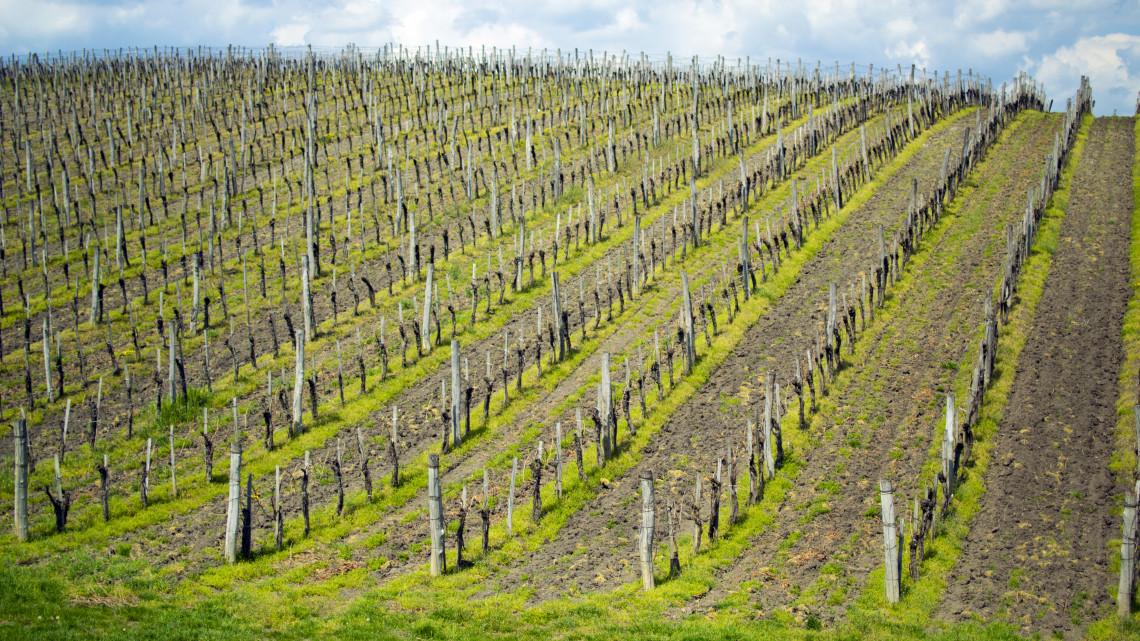 Ez már a jövő: nagyot fejlődhet Egerben a szőlőklónozás