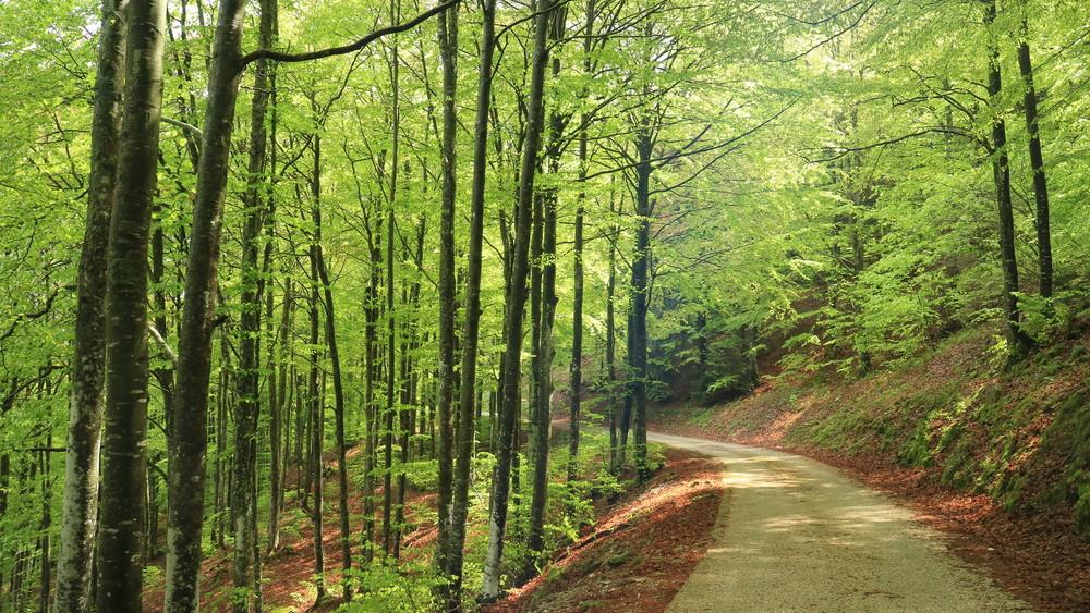 Zöld vállalkozói díjjal jutalmaz a Bükki Nemzeti Park