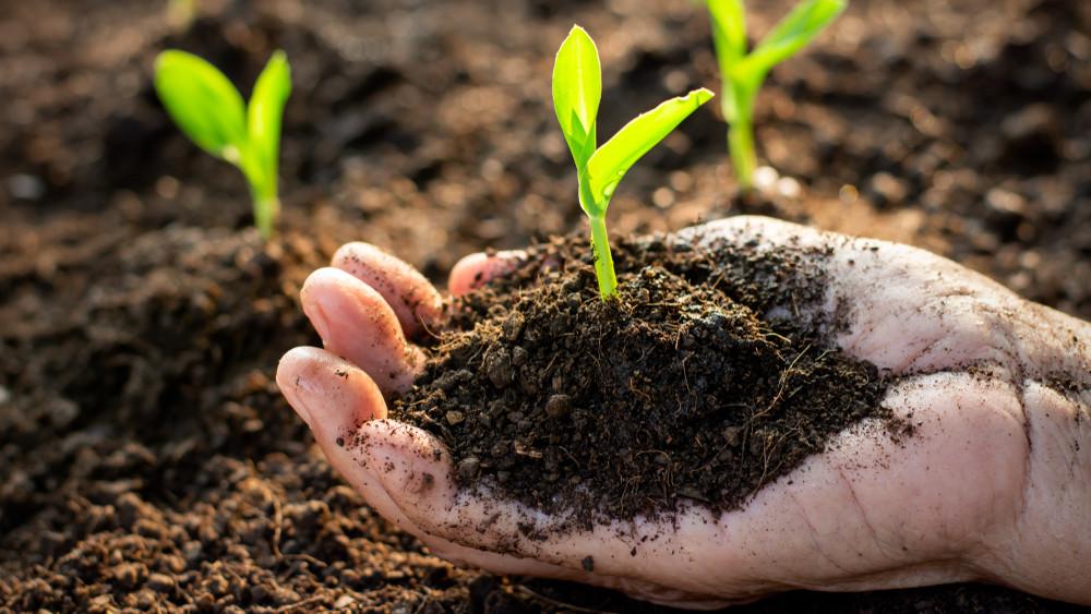 Ez a biogazdák titkos receptje: így lesz műtrágya nélkül is gazdag a betakarítás