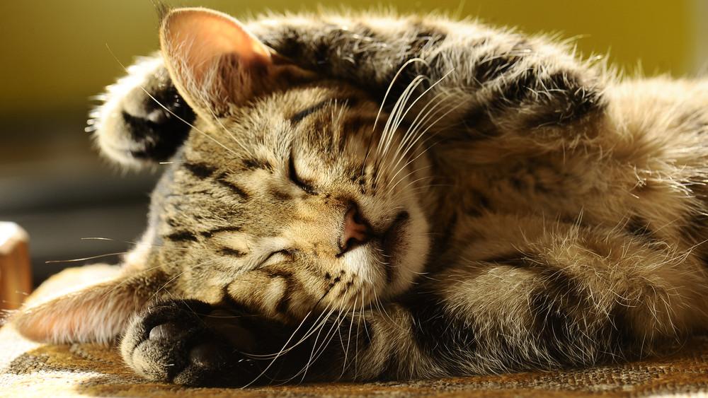 Kutyák és macskák mindenütt: évről évre nő a háziállatok száma Magyarországon