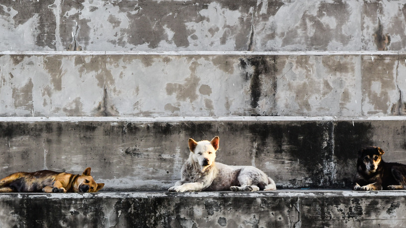Több ezer kóborkutyát lőnek ki a vadászok: ezekben a megyékben a legdurvább a helyzet