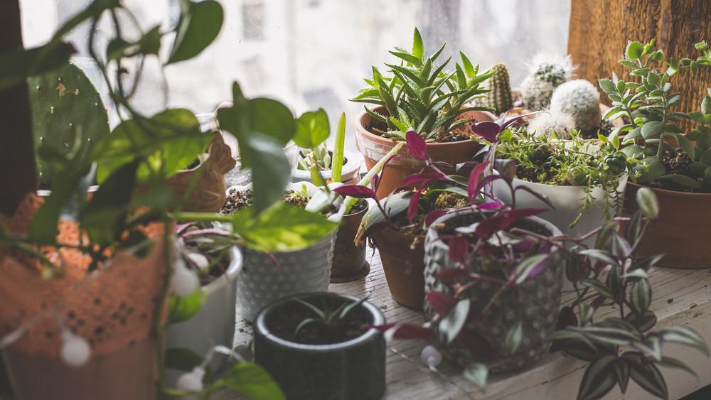8 toxinszűrő szobanövény, amik megtisztítják otthonod levegőjét
