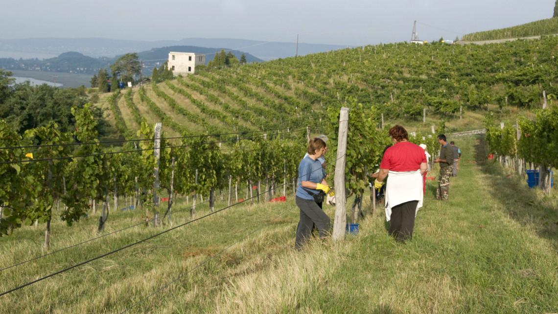 Épül a jövő borospincéje: a Villa Tolnay nagyszabású fejlesztésbe kezdett