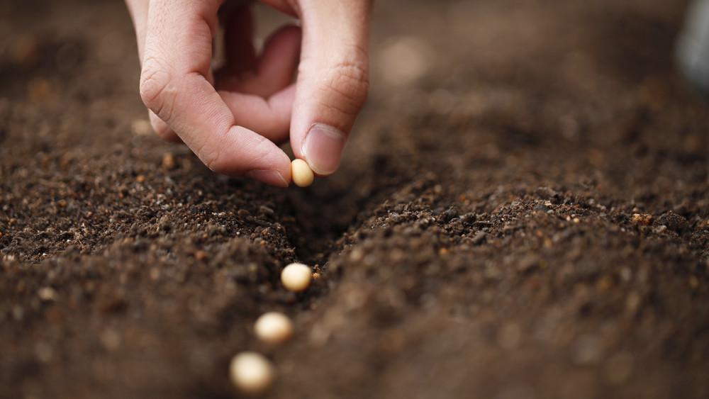 Itt a nagy tavaszi vetési naptár: ha így ültetsz, gazdag lesz a betakarítás