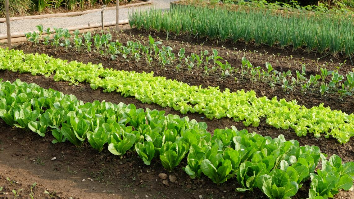 11 igénytelen konyhakerti zöldség: ezeket vesd el, biztos lesz a siker!