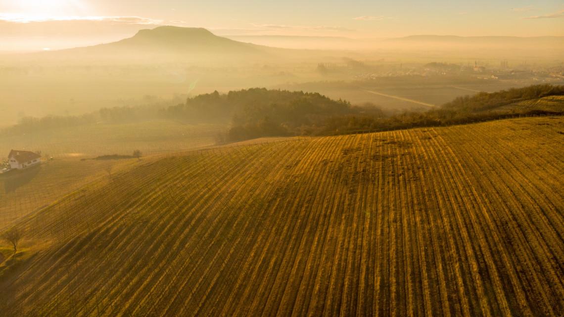Bizonytalan a magyar mezőgazdaság: ingadozik a mennyiség és a minőség