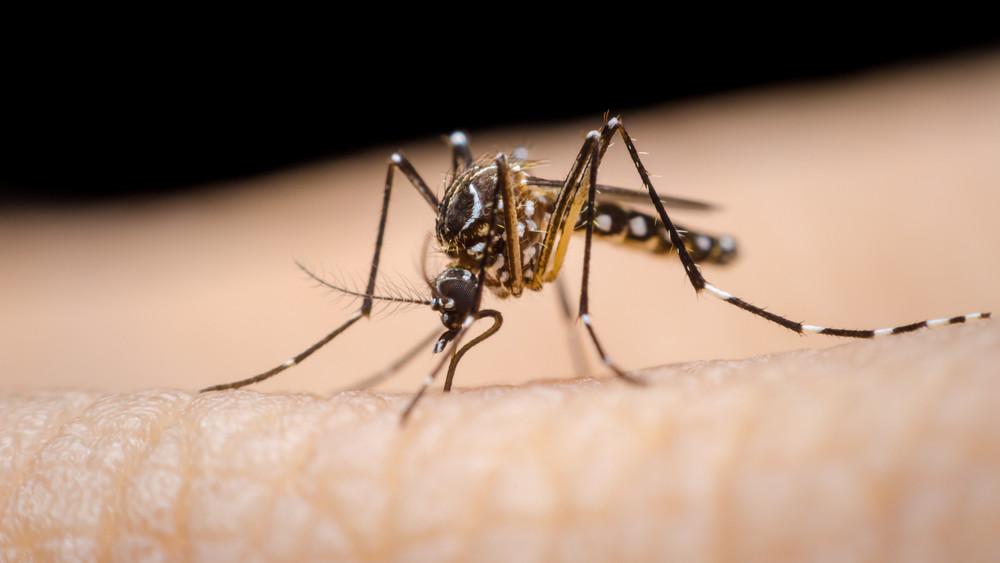 Emberre is veszélyes szúnyogfaj terjed Magyarországon: egyre többen vannak
