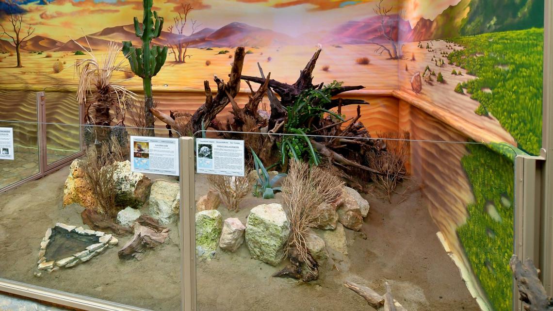 Bővült a debreceni állatkert: ezek az újdonságok várják a látogatókat