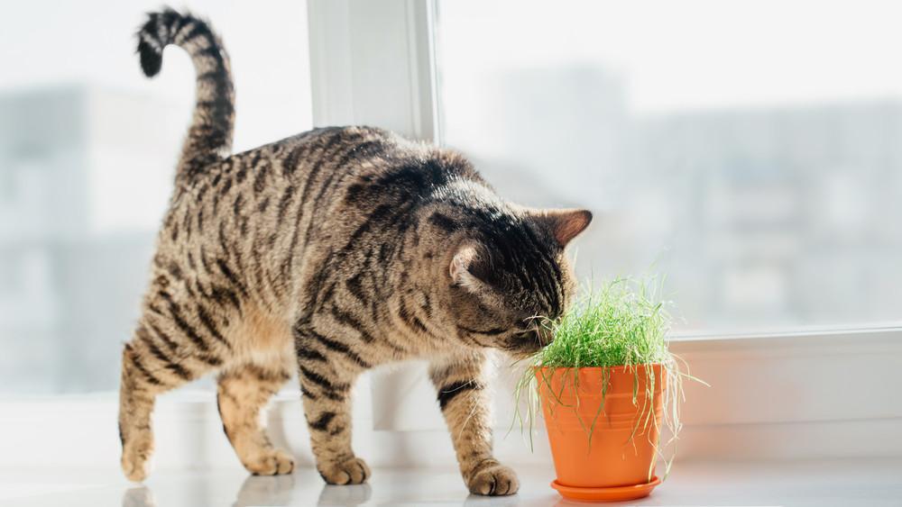 Kutyások, macskások, figyelem! Ez a 8 növény tuti, nem mérgezi meg a kedvenceket