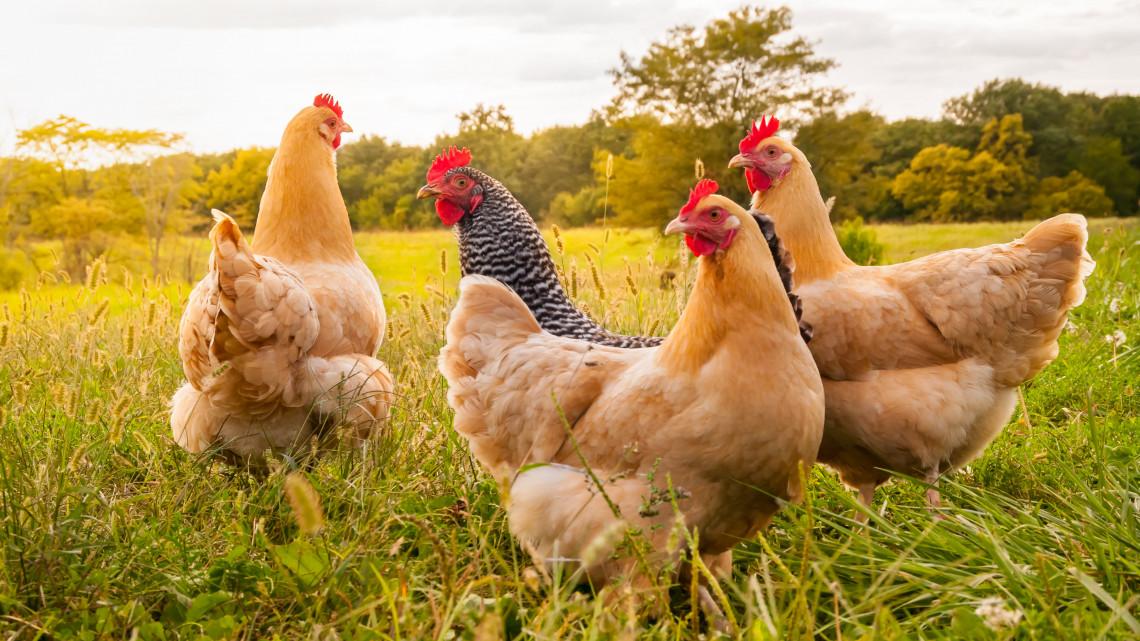 Fellélegezhetnek a termelők: visszamenőleg kifizetik a támogatást