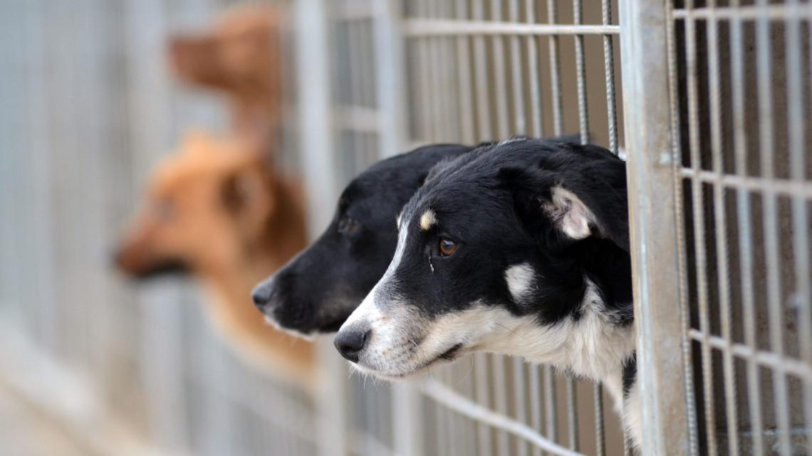 Útmutató a kutyák örökbefogadásához: könyv segít, hogy jó gazdivá válhass