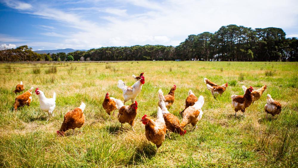 Most már biztos: több pénz jut idén állatjóléti támogatásra