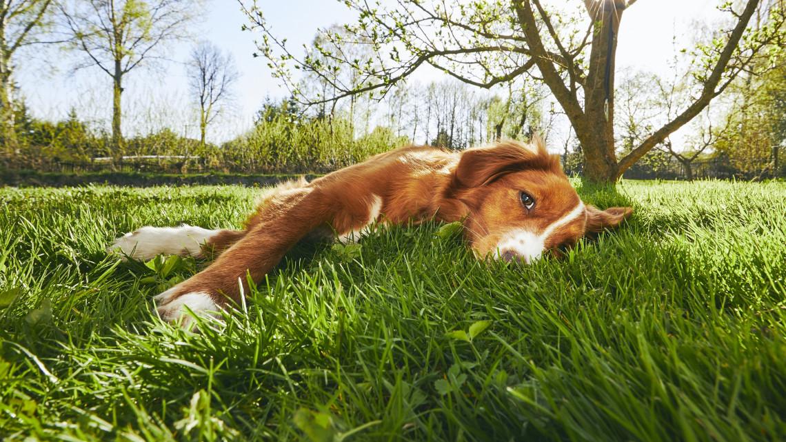 Viszlát, tavaszi fáradtság! 8 házi praktika a kimerültség ellen