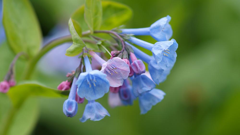 9 káprázatos évelő virág: most ültesd el, ha szebb kertet akarsz a szomszédodénál