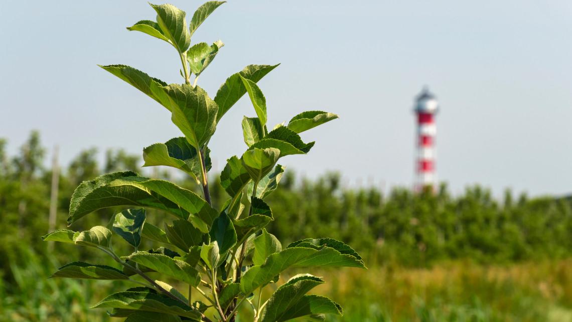 Szakemberhiány az agráriumban: a felzárkóztatási program lehet a megoldás