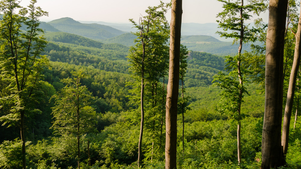 Tovább fejlesztené az Agrárminisztérium Magyarország erdei turizmusát
