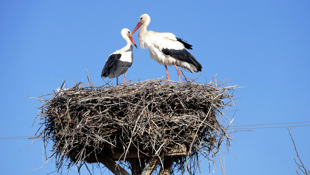 Rohamosan csökken a madárpopuláció: eltűnhetnek hazánkból a gólyák?