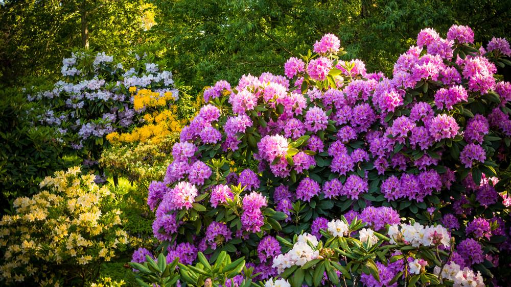 5 csodaszép díszkerti növény, amik árnyékos helyen is virágba borulnak