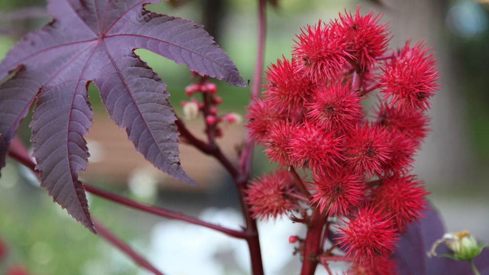 9 hétköznapi növény, ami mérgező: sokan nem is sejtik, pedig itt élnek velünk