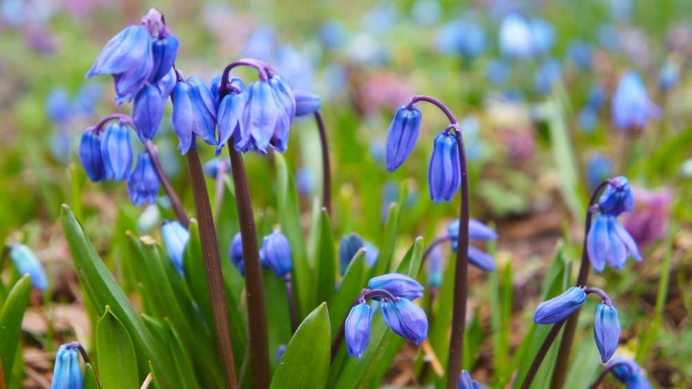 Irány a Sóstói-erdő: különleges virágot fognak számlálni a hétvégén