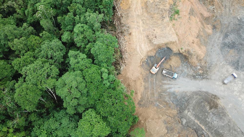Eltűnt egy komplett erdő a Balaton partján