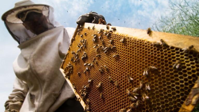 Méhészeknek készült applikáció nyert a maratoni ötletversenyen