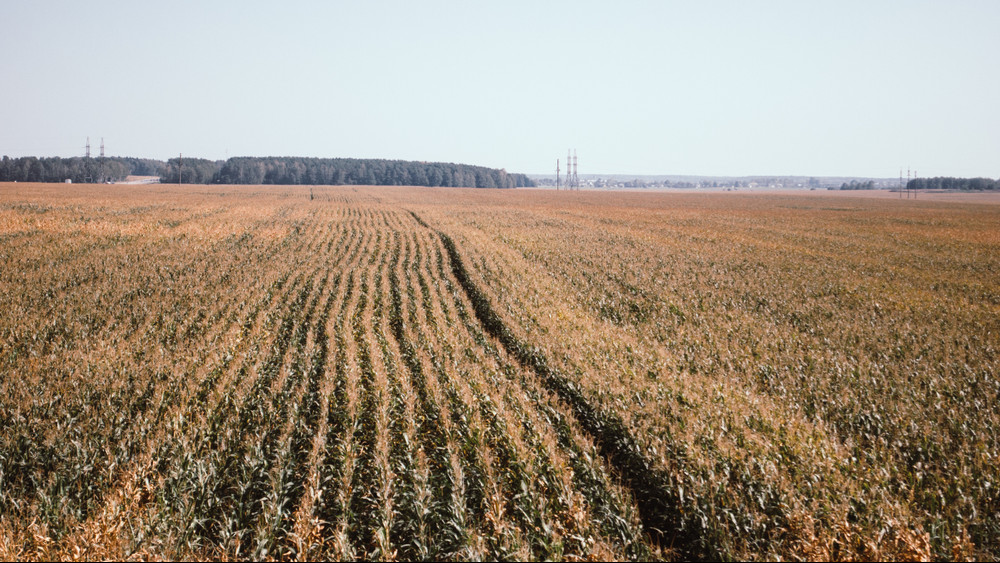 Veszélyben az őszi gabona: ilyen szárazság már rég nem volt a földeken