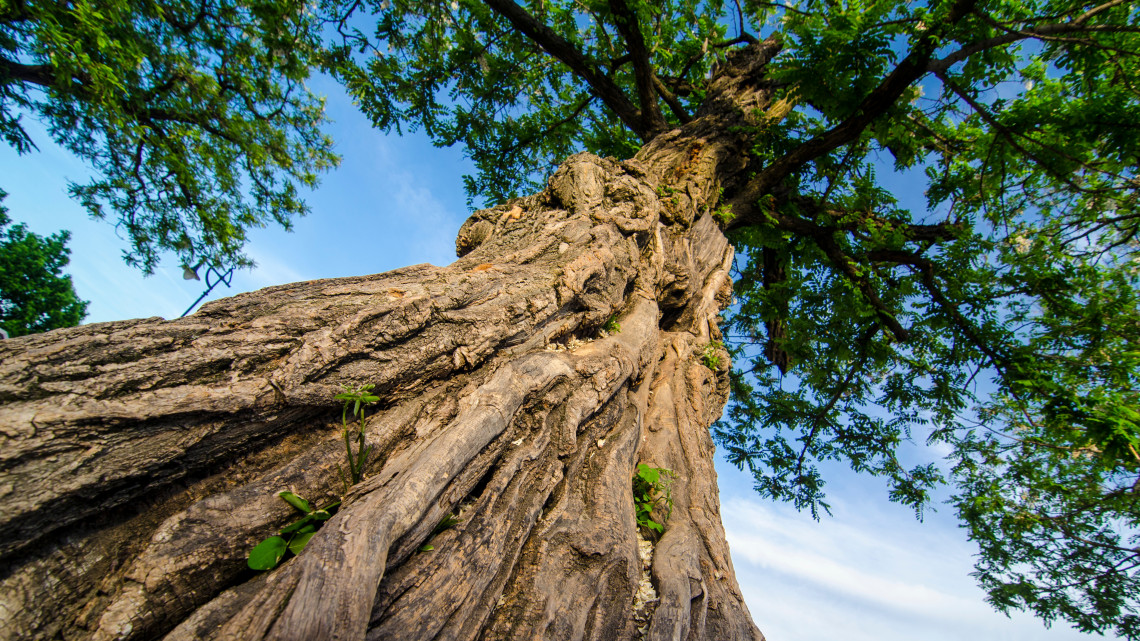 Legyen a Te kedvenc fád az Év Fája! Még várják a nevezéseket a versenyre