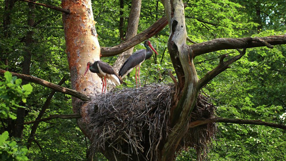 Tojást raktak az ország kedvenc gólyái: kukkants be te is a fészkükbe