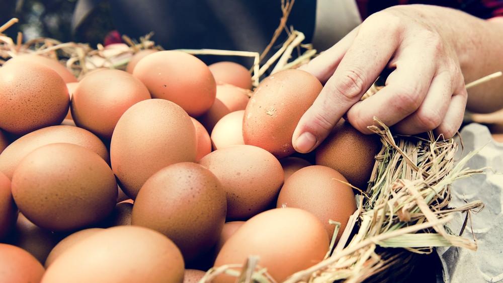 Nem várható drágulás: így készülnek a húsvétra a tojástermelők