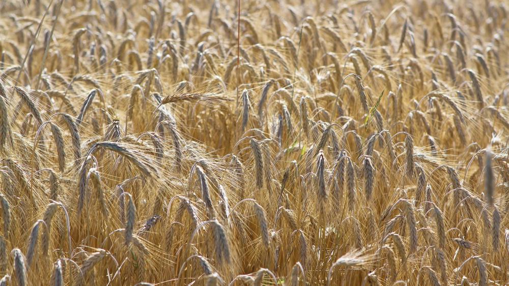 Aggódnak a magyar gazdák: brutális szárazság tombol a magyar földeken