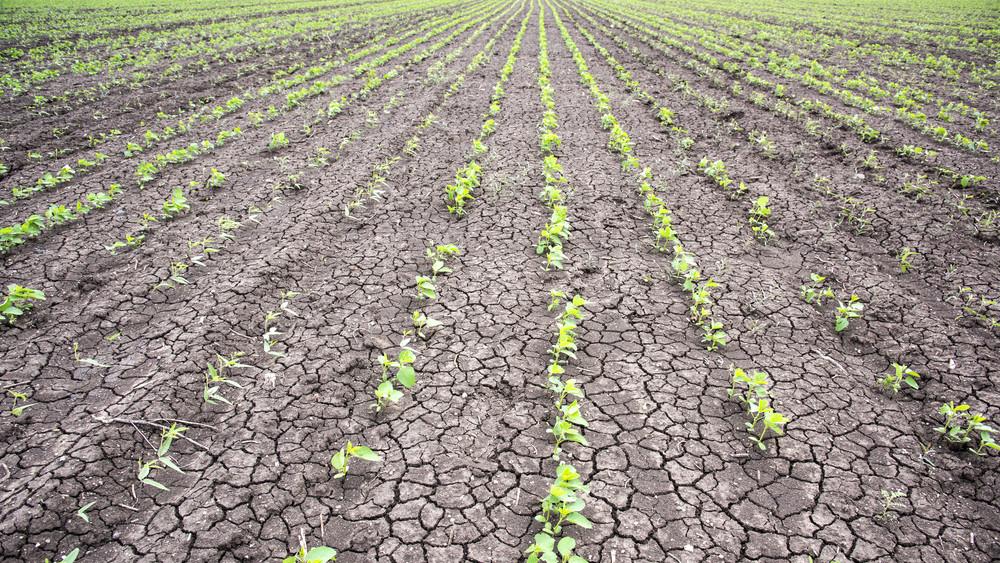 Óriási aszály uralja az országot: változik az öntözési idény az agráriumban