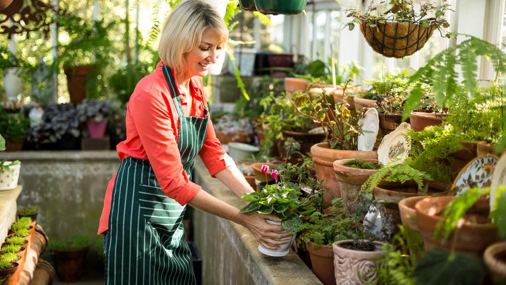 Pusztulnak nálad a szobanövények? Ezekkel a praktikákkal megmentheted őket