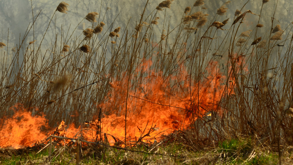 Száz hektáron ég a nádas a Balatonnál: a tűz már nem terjed tovább