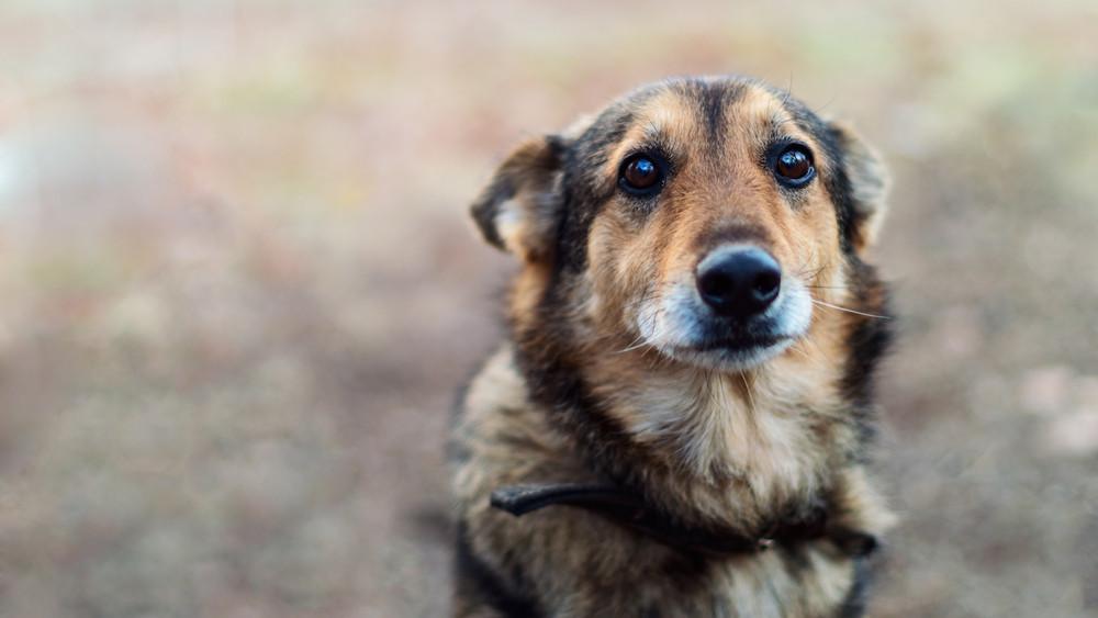 Így mentik a szabolcsi kutyákat: száznál is több állat vár gazdára