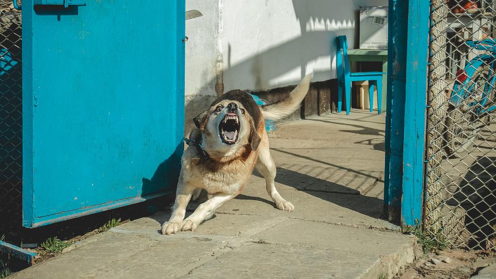 Újabb halálos kimenetelű kutyatámadás: már vizsgálják az ügyet