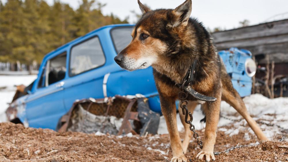 Ezt okozza a kutyával a láncon való tartás: így óvd meg kedvenced