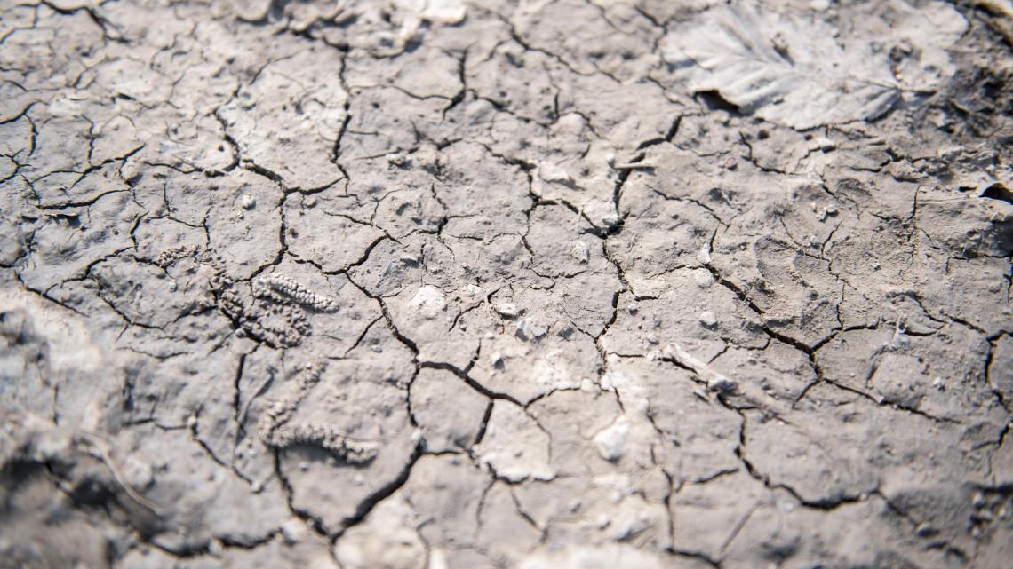 Nem volt elég az eső: öntözéssel próbálják megmenteni a termést