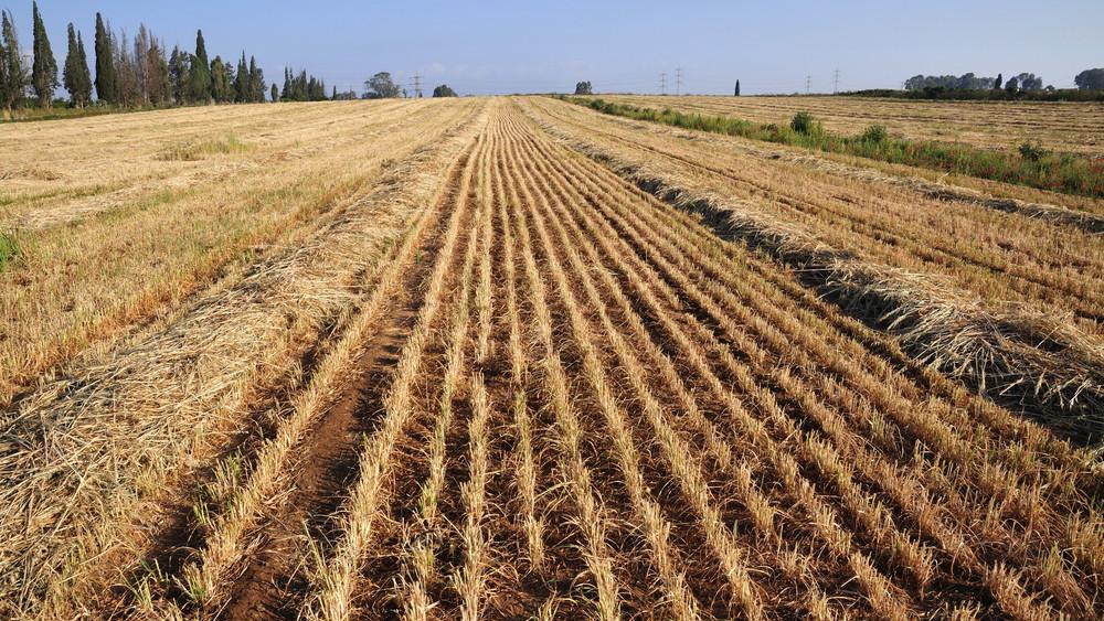 Korai pánikba esni: lesz mit termeszteni az aszályos időszakban is