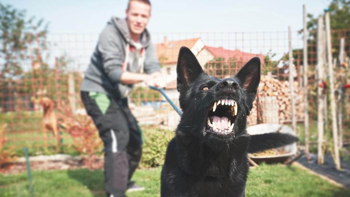 Sokkoló: nyugdíjasra támadtak harci kutyák Szegváron