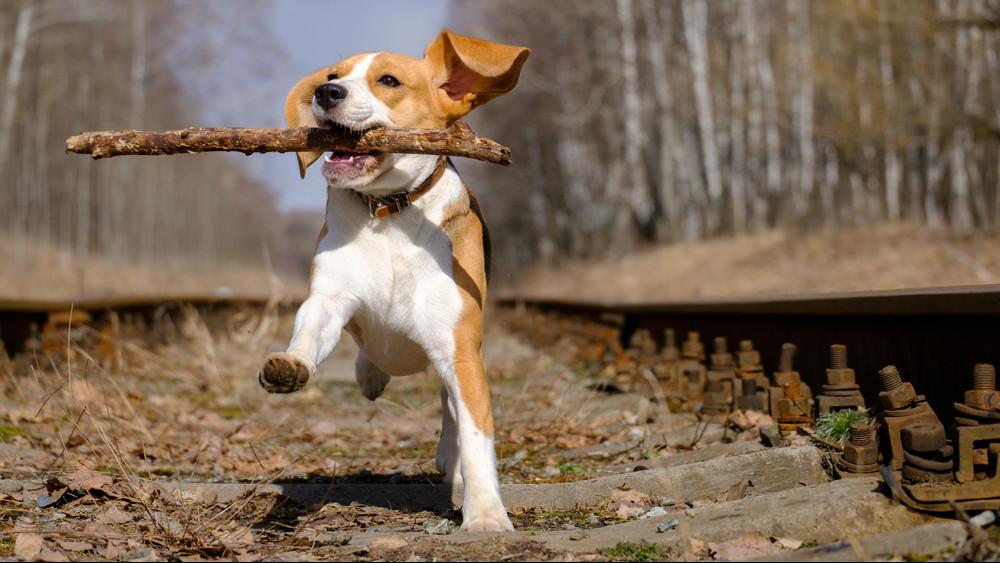 Életeket menthet a kutyaorr: ebeink képesek kiszagolni a rákot!
