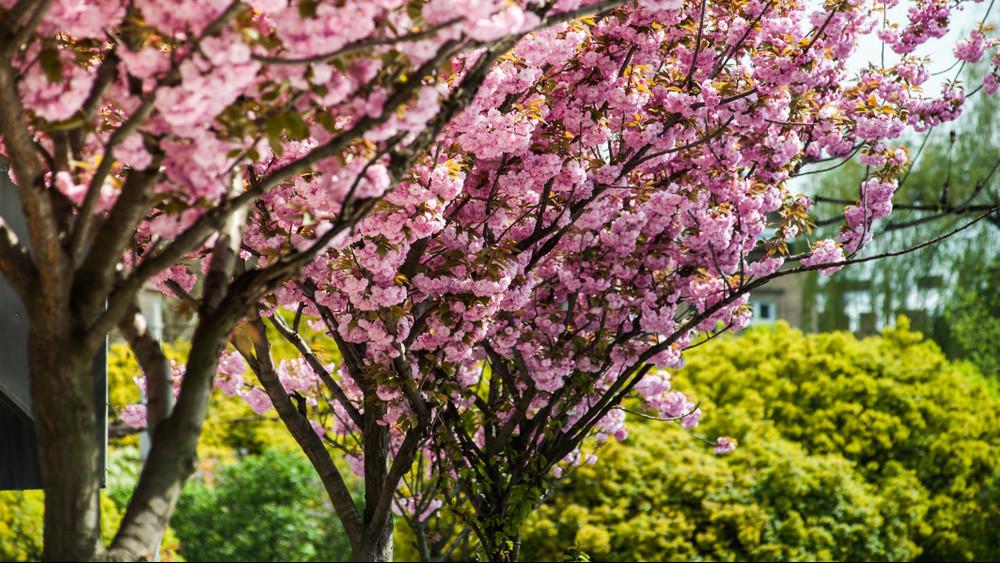 Most kell elültetni: 9 fa, amit a legkisebb kertekhez találtak ki
